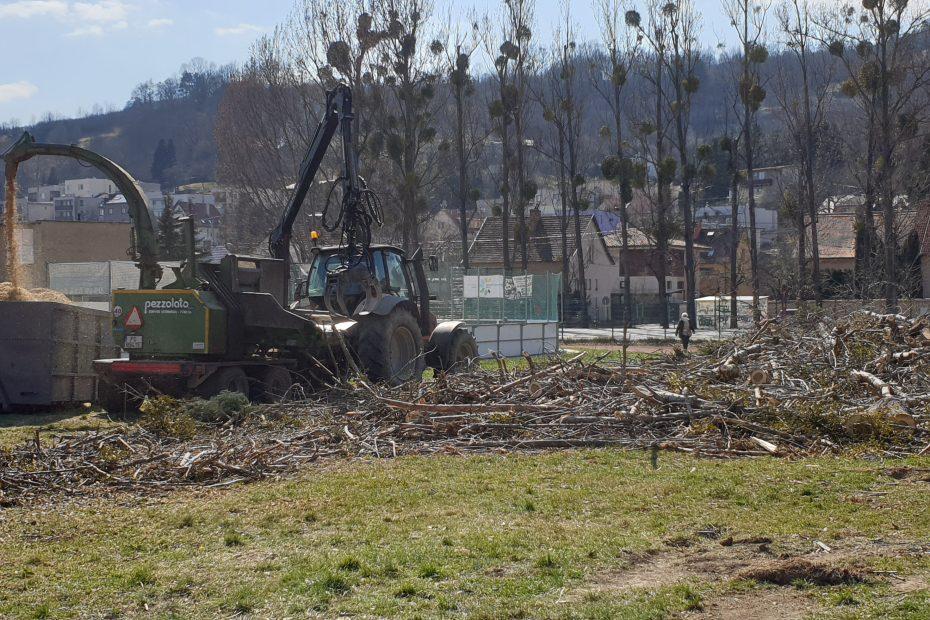 Štiepkovanie drevnej hmoty po výrube starých stromov