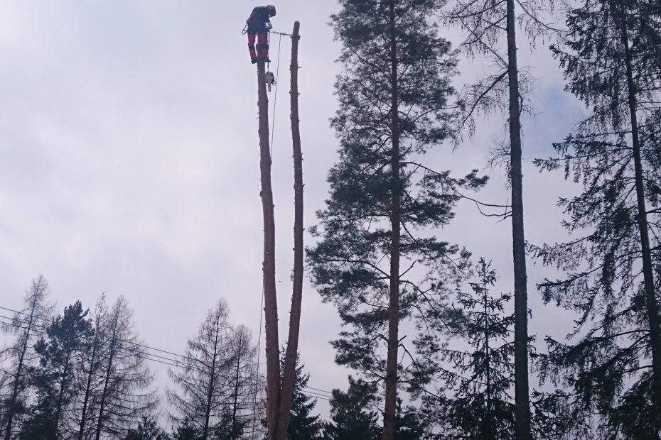 Nebezpečný výrub vysokého stromu - Arborista Jaroslav Kušnír