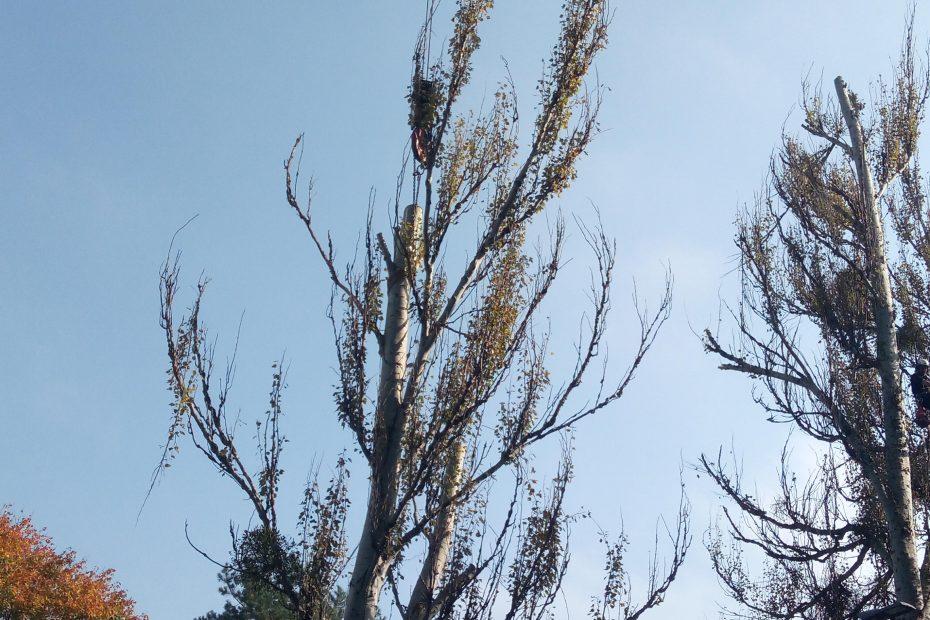 Výrub stromu v zastavanej oblasti - CEDERS s.r.o.