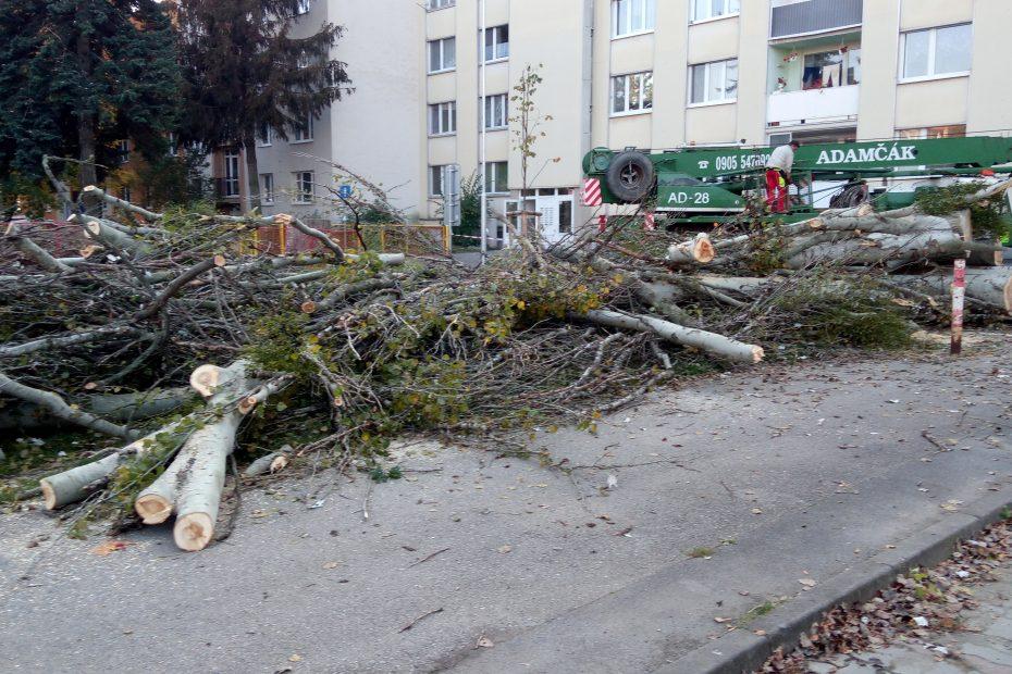 Upratovanie drevnej hmoty po oreze a výrube stromov - CEDERS s.r.o.