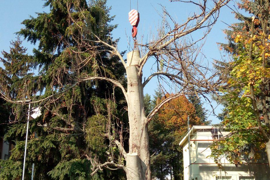 Výrub stromu v zastavanej oblasti - MŠ Československej armády Prešov - CEDERS s.r.o.