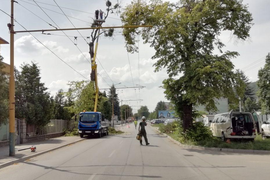 Nebezpečný výrub stromu nad elektrickým vedením na Budovateľskej ulici v Prešove - CEDERS s.r.o.